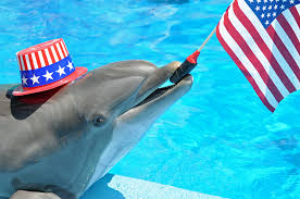 Fourth of July Dolphin 2