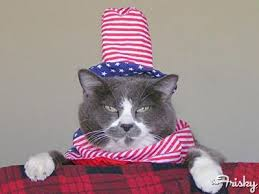 Fourth of July Kitty 6