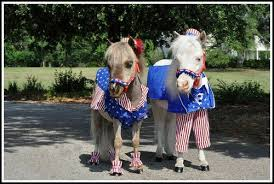 Fourth of July Miniature Horses