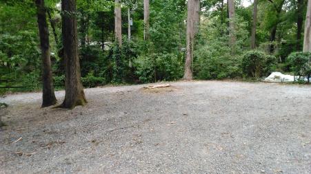 Tree Stump Driveway 071916 Storm