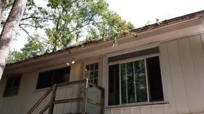 renovations-trees-in-gutter