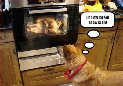 thanksgiving-doggie