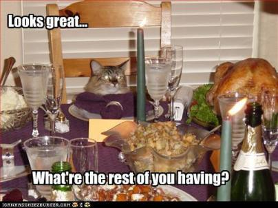 thanksgiving-kitty