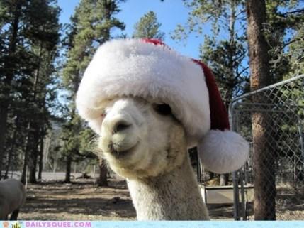 christmas-alpaca