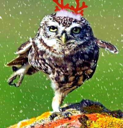 christmas-dancing-owl
