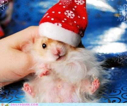 christmas-hamster