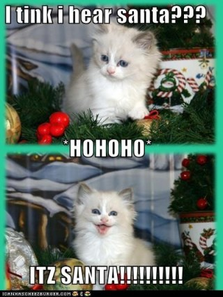 christmas-kitten-hears-santa