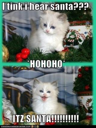 christmas-kitten-hears-santa