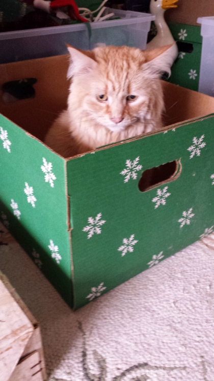 giselle-christmas-box