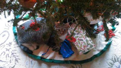 holly-christmas-2016-3