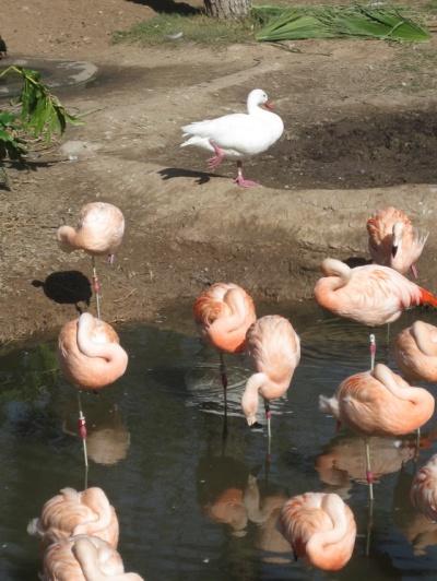 ducky-see-ducky-do